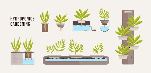Coleção de plantas verdes crescendo em vasos com solução nutritiva mineral.