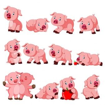 Coleção de porco fofo com vários posando