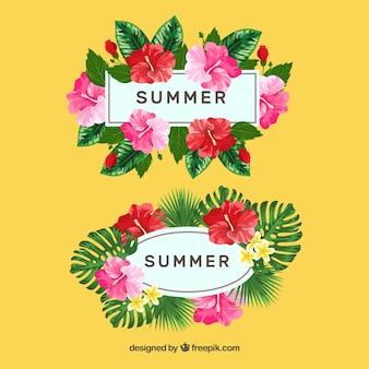Coleção de quadros de verão