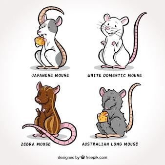 Coleção de raça de ratos desenhados mão