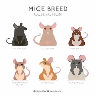 Coleção de raça de ratos planos