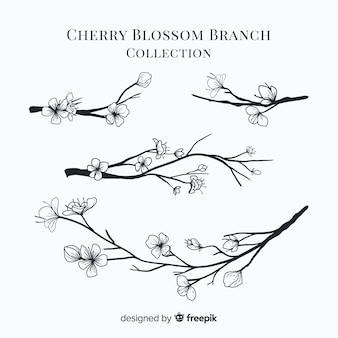Coleção de ramo de flor de cerejeira