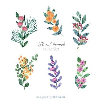 Coleção de ramo floral em aquarela