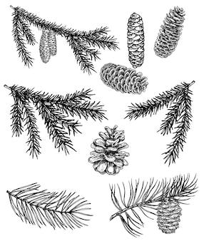 Coleção de ramos de coníferas e pinhas