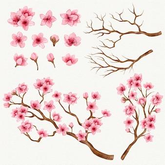 Coleção de ramos e flores de sakura