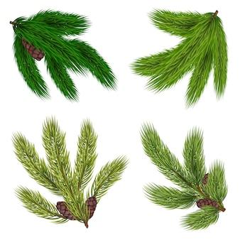 Coleção de ramos verdes de árvores coníferas