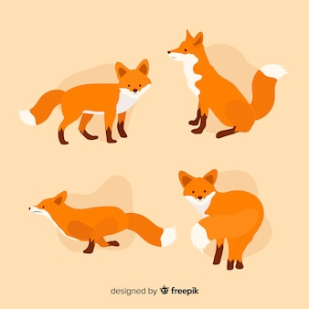 Coleção de raposas bonitinha