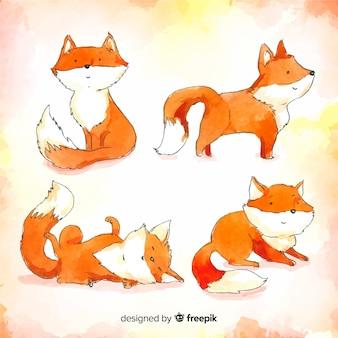 Coleção de raposas selvagens em aquarela