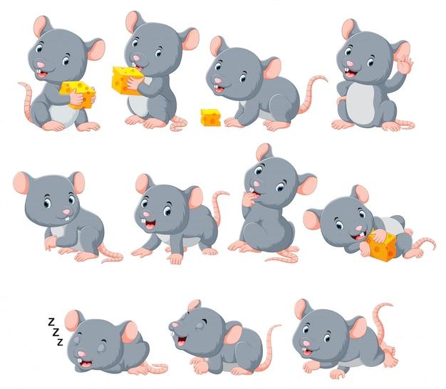 Coleção de rato bonitinho com vários posando