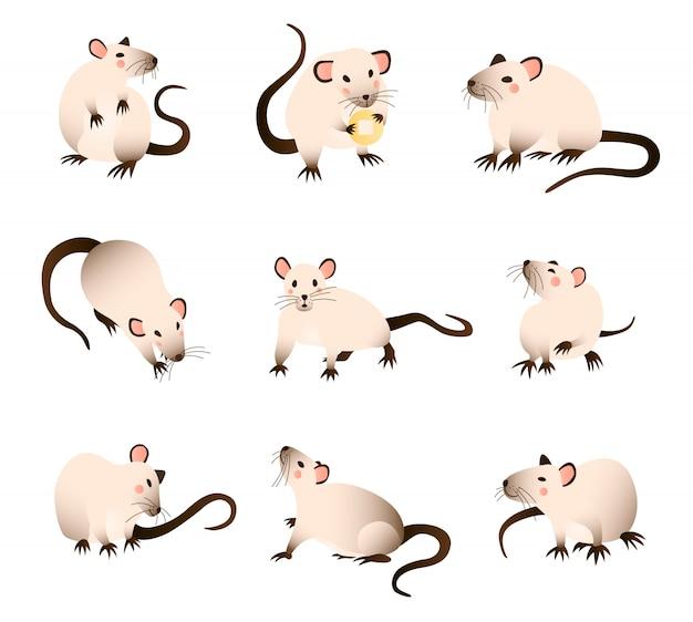 Coleção de ratos de desenho animado, ratos de cores diferentes em várias poses e ações