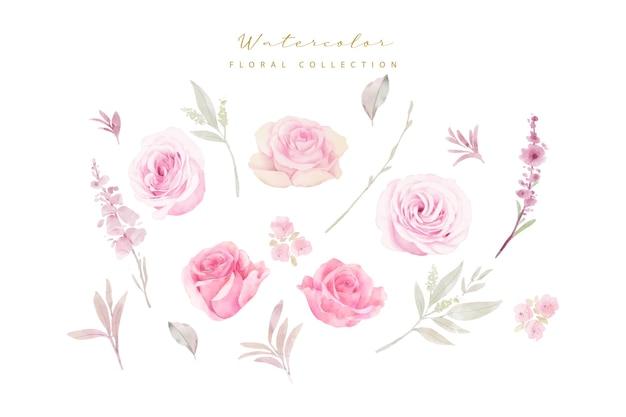 Coleção de rosas em aquarela