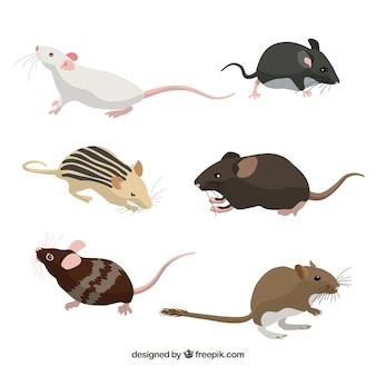 Coleção de seis raças de ratos