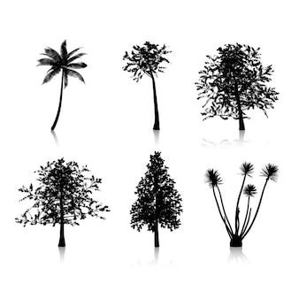 Coleção de seis silhuetas de árvores diferentes