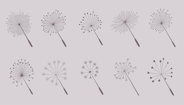 Coleção de sementes de flores dente de leão
