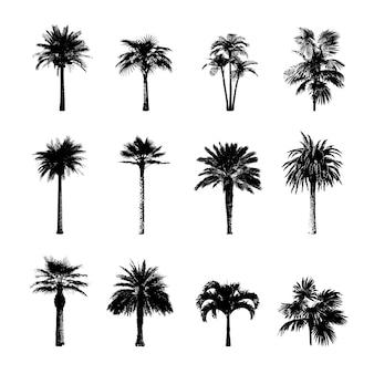 Coleção de silhuetas de árvore de palma.
