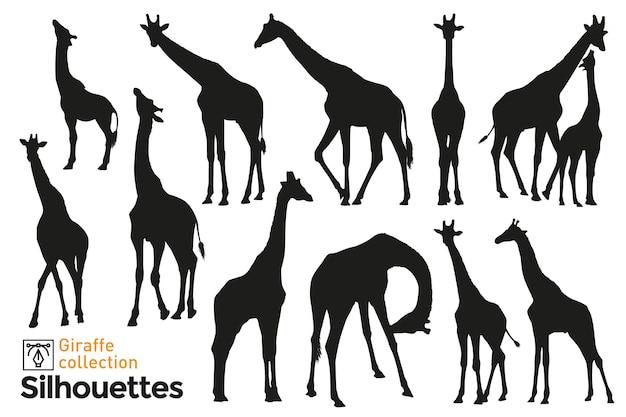 Coleção de silhuetas de girafas