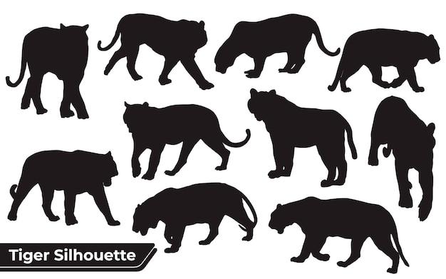 Coleção de silhuetas de tigres animais em diferentes poses