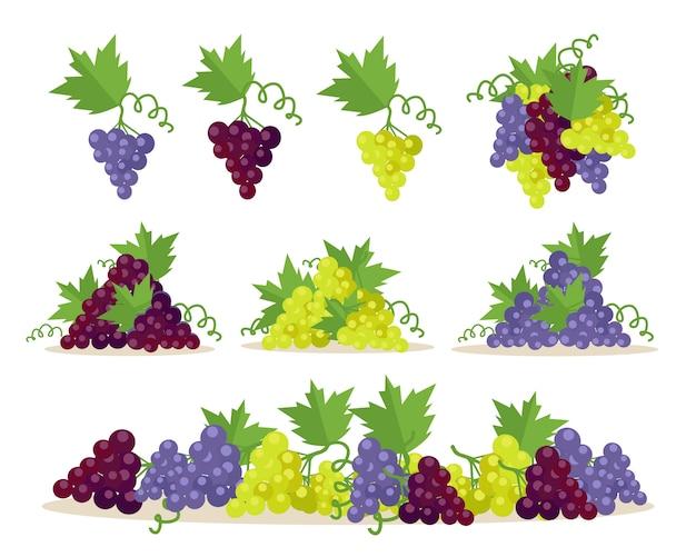 Coleção de tipos de uvas. frutas para fazer vinho.