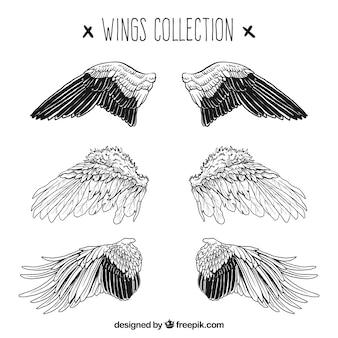 Coleção de três pares de alas realistas desenhadas à mão