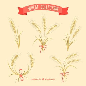 Coleção de trigo desenhada mão
