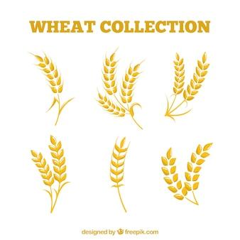 Coleção de trigo plano