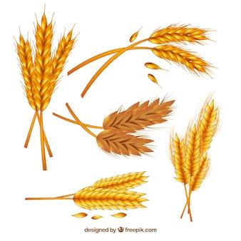Coleção de trigo realista