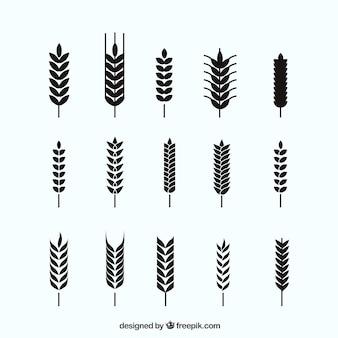 Coleção de trigo silhouette