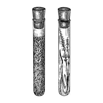 Coleção de tubos de vidro com flores. desenhado à mão vintage.