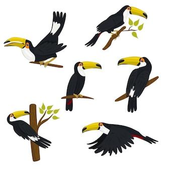 Coleção de tucanos isolados