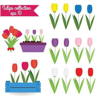 Coleção de tulipas