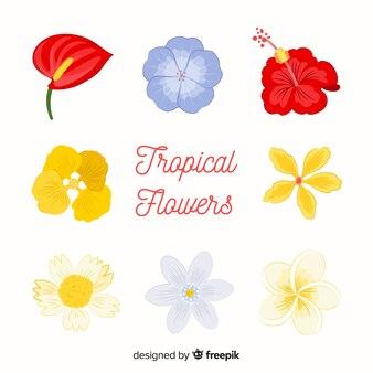Coleção de várias flores tropicais