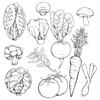 Coleção de vários legumes frescos, usando a mão desenhada ou estilo de desenho