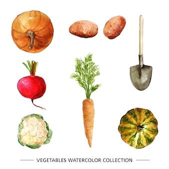 Coleção de vegetais com aquarela