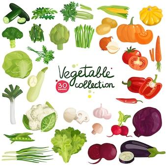 Coleção de vegetais e ervas