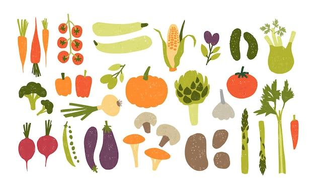 Coleção de vegetais frescos deliciosos coloridos desenhados à mão, isolados no branco