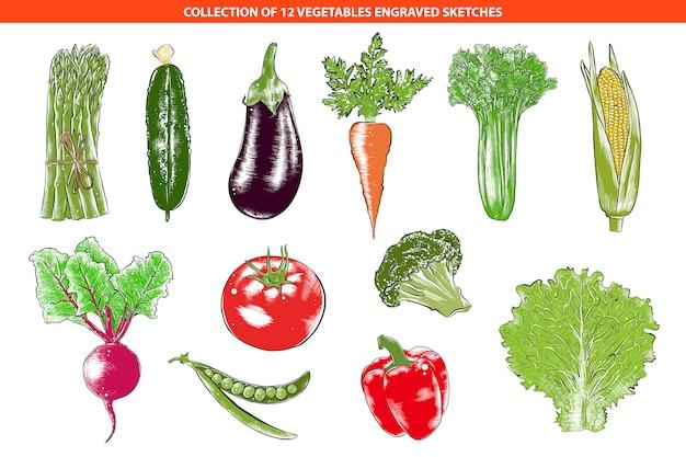 Coleção de vegetais orgânicos estilo gravado