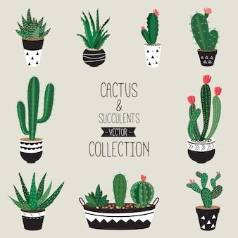 Coleção de vetores de cactos e suculentas conjunto de nove plantas de casa decorativas