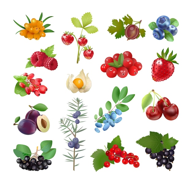 Coleção de vetores de frutas em um estilo realista.