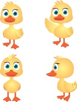 Coleção de vetores de pato bonito, isolado no fundo branco