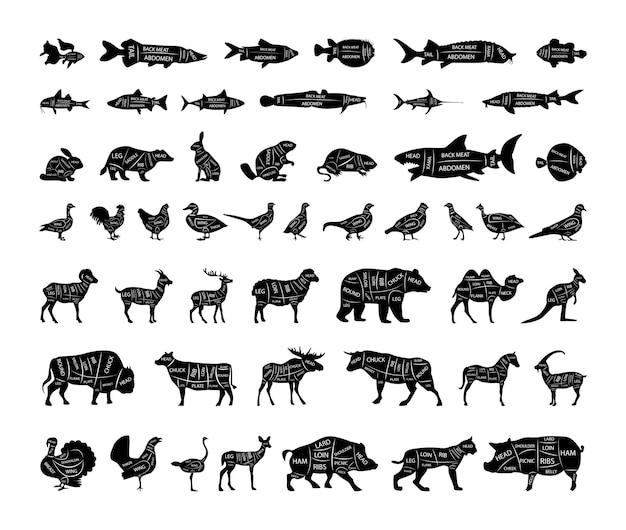 Coleção de vetores de peixes, animais e pássaros com linhas de corte.