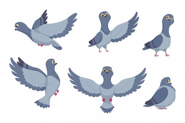 Coleção de vetores de pombos dos desenhos animados
