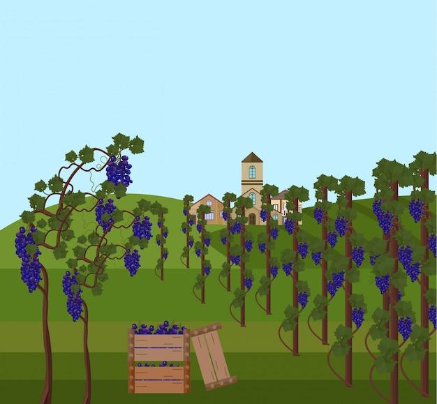 Coleção de videira de uvas ilustração vetorial. modelo de estilo plano