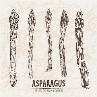 Coleção desenhada a mão aspargus