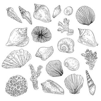 Coleção desenhada à mão de conchas e corais em estilo de gravura