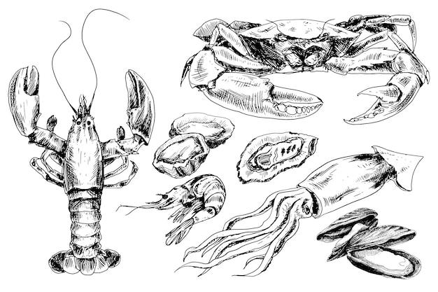 Coleção desenhada de mão de frutos do mar