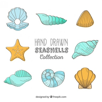 Coleção desenhados mão conchas