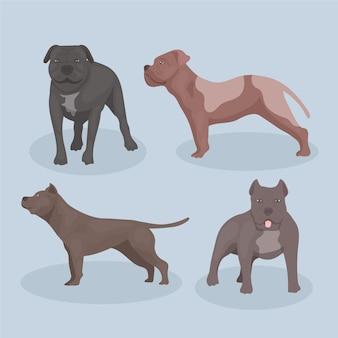 Coleção detalhada de cães pitbull