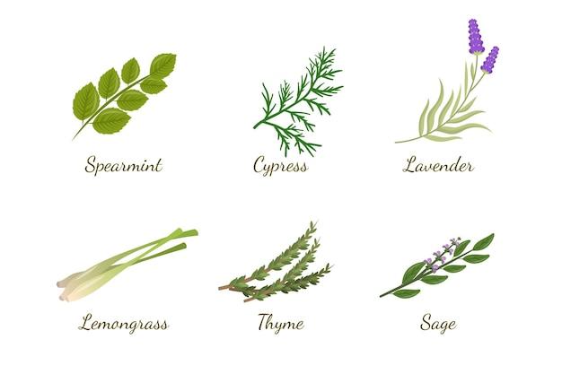 Coleção detalhada de óleos essenciais de ervas