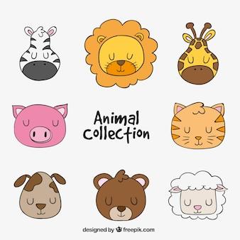 Coleção do animal desenhado mão