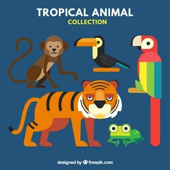 Coleção dos animais tropicais